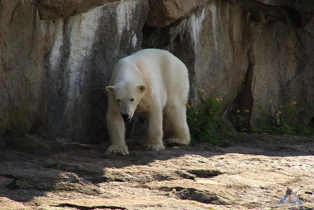 Zoo Berlin 13.05.2015  18
