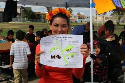 A Dia de los Muertos Monarch Butterfly Festival volunteer showcases the Life Cycle of a Monarch Butterfly activity for kids