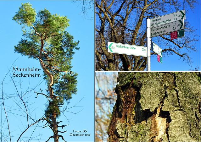 Mannheim-Seckenheim, 3. Dezember 2016 ... Umgehungsstraße, Friedhof, Suebenheimer Wäldchen ... Spaziergang bei Kälte, blauem Himmel und Sonnenschein ... Fotos: Brigitte Stolle, Mannheim
