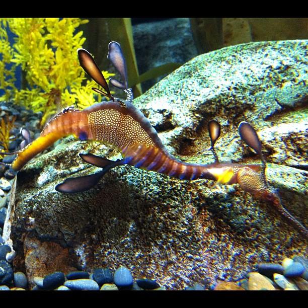 Crazy dragon fish from the atlanta aquarium daveb flickr for Crazy fishing vr