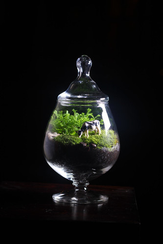 Brandy Snifter Terrarium with Cow | by joshleo