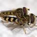 Eupeodes corollae mating