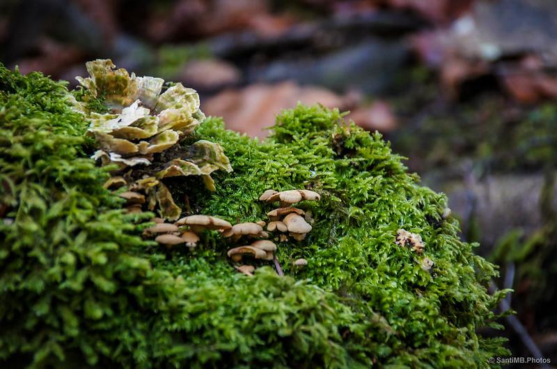 Hongos y musgo tapizan Irati junto al manto de hojas marchitas en el suelo.