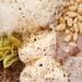 green bean anchovy salad 2