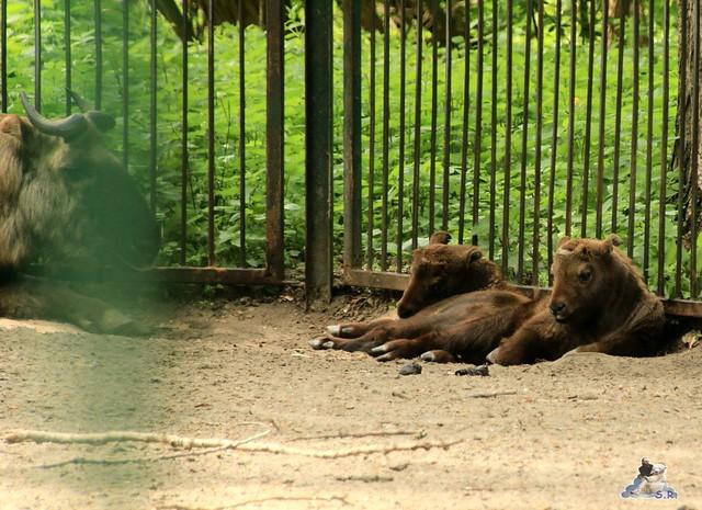 Tierpark Berlin 09.05.2015  114