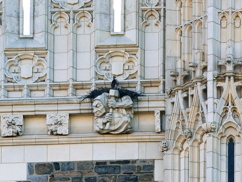 CCNY Hawk Nestling - 1693