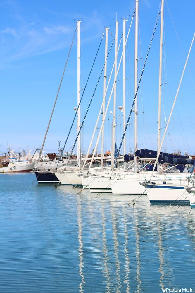 Alberi al porto