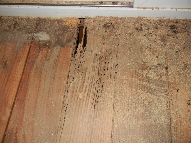 Before Termite Damage I Had The Termites Treated A Few