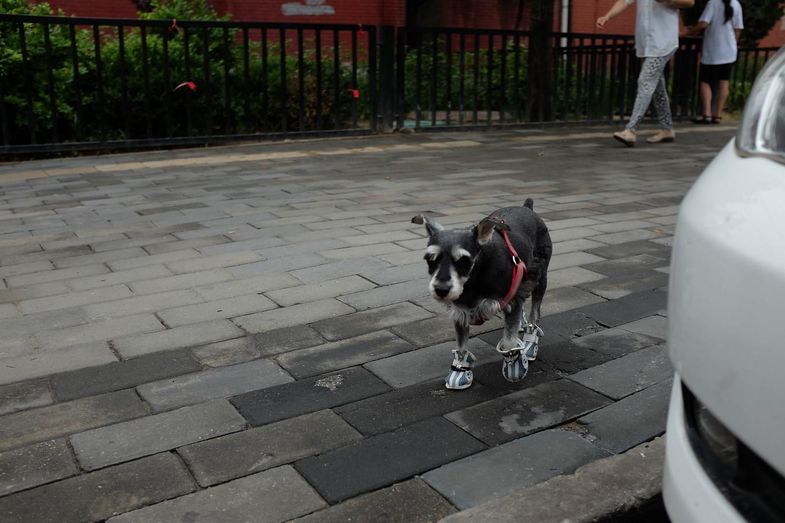 Hunde in BJ