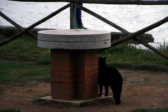 Gatto del borgo del lago di Fogliano