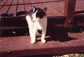 1990_05_19_PatchesOnDeckStep