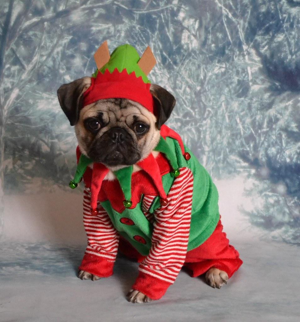 santa u0026 39 s little helper elf boo lefou