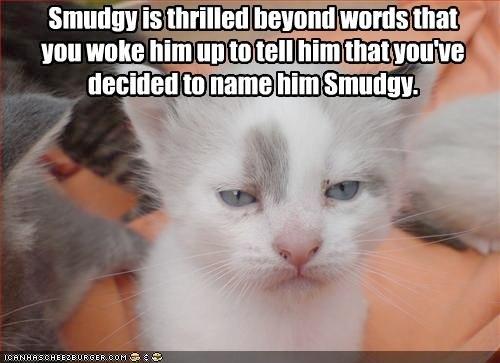 Cute And Funny Cat Memes Atsdogs