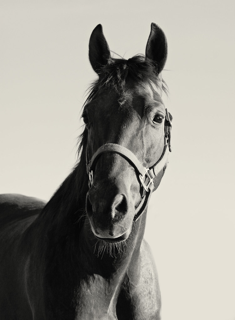 Black and white horse picture - photo#26