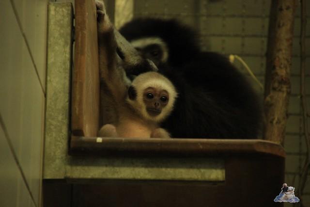 Tierpark Berlin 10.05.2015  70
