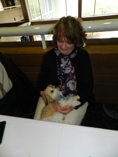 Pip keeps me company at a booksigning