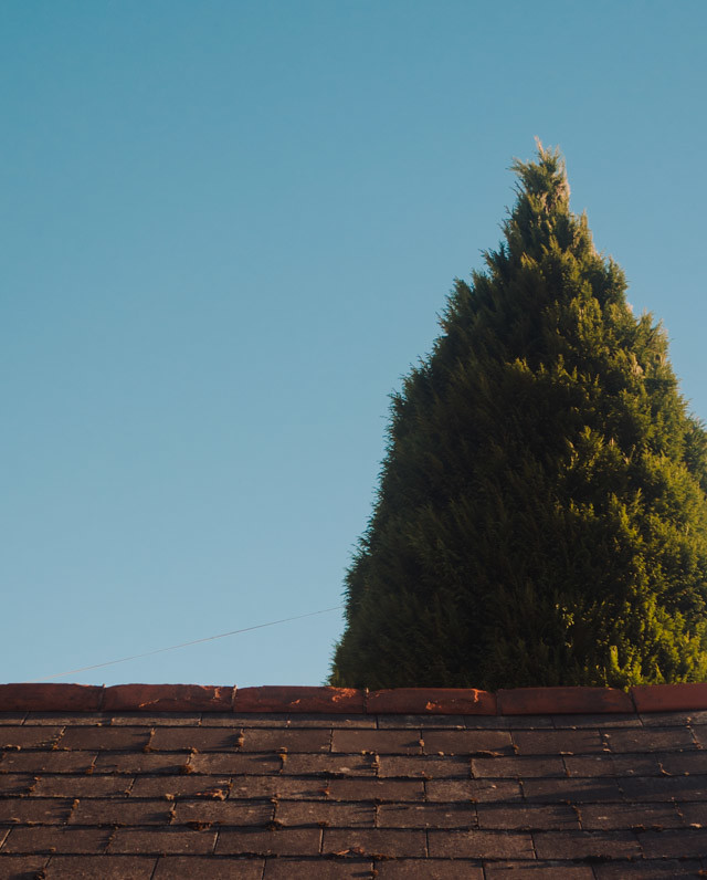 tree over roof