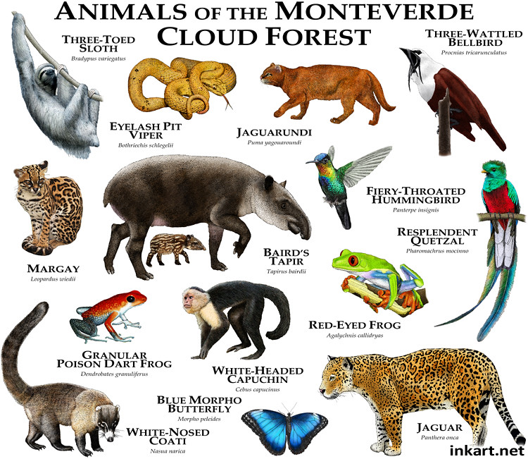 Costa Rica Animals Cats