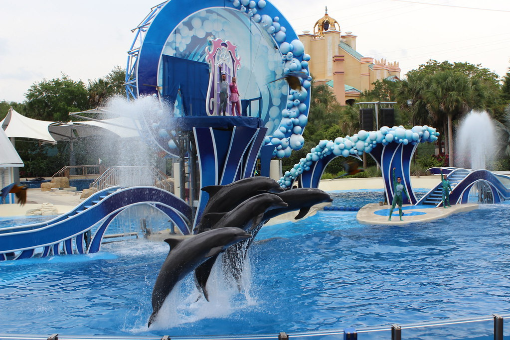 how to become a dolphin trainer at seaworld