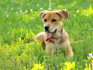 Creating A Healthy Diet For Your Dog