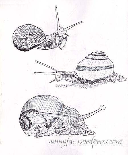 snail-sketch-2