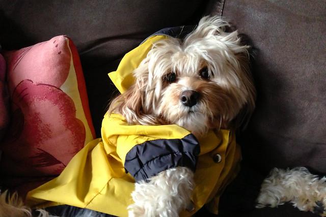 The Beautful Bella in her Raincoat