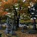 Oakwood Cemetery, Raleigh