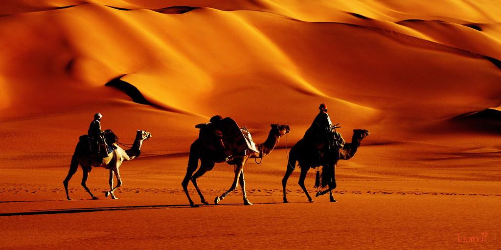 Image Result For Camel Color