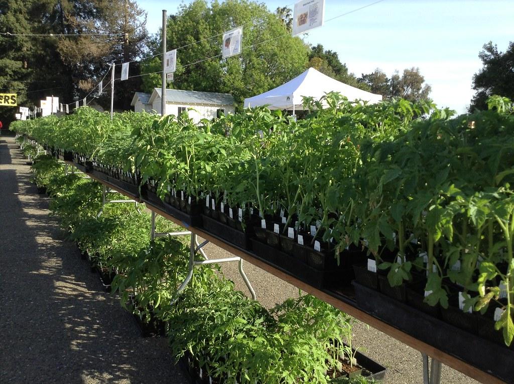 All lined up photo marianne mueller 2007 master - Master gardeners santa clara county ...