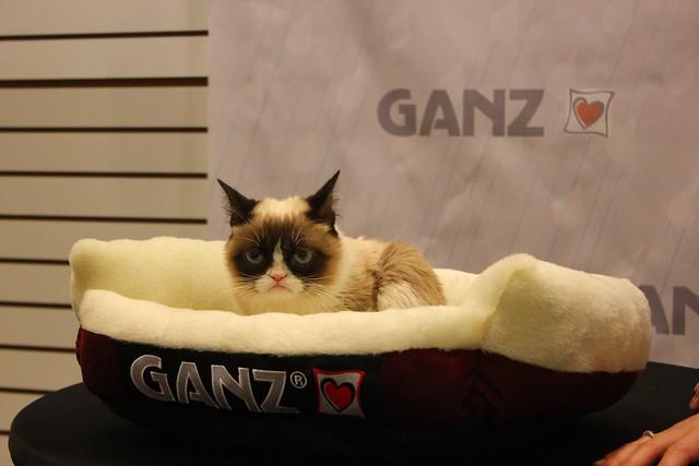 Grumpy Cat Everyone Thins Im A Boy Meme