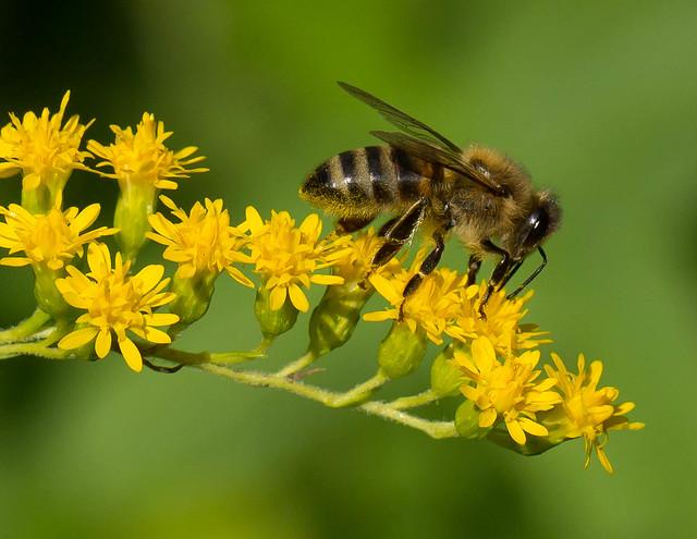 Members Managing Russian Bees Russian 109