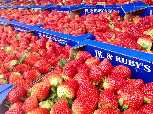 #BerryFest2014: rows of berries !@FLStrawberryFst""