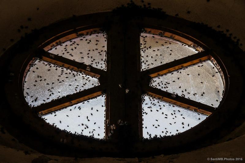 Enjambre de moscas en un ventanal