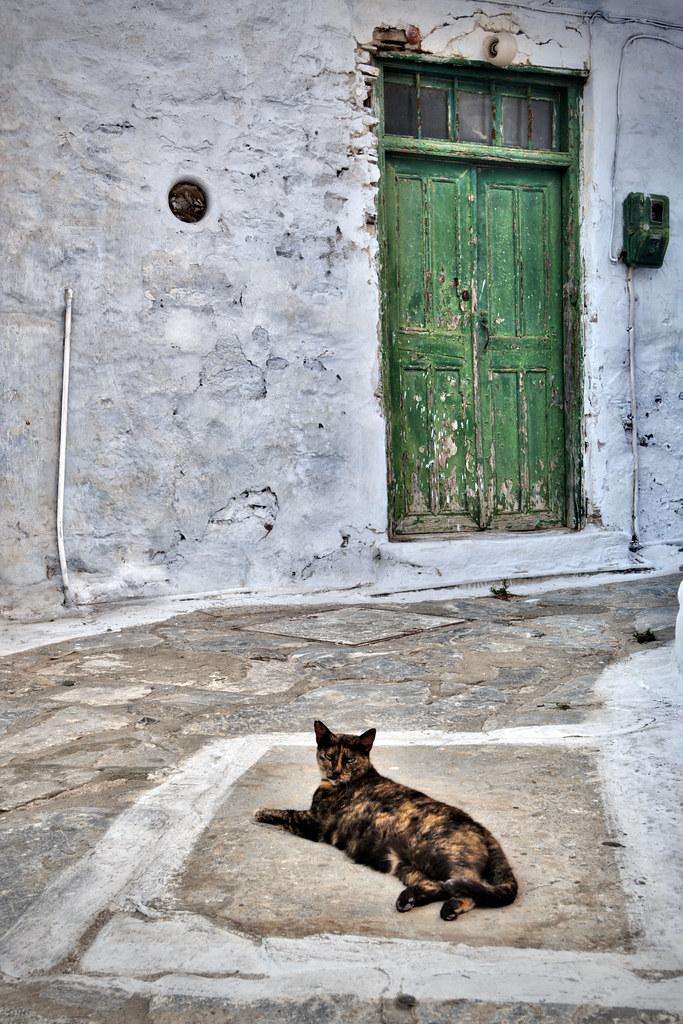 Cat & Green Door