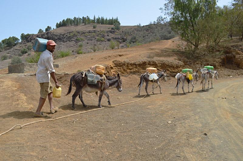 Water mules, Santo Antao, Cape Verde