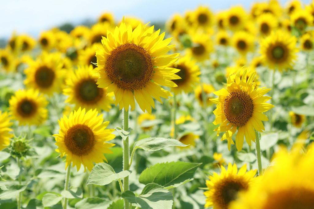 картинки на рабочий стол август цветы № 409686 загрузить