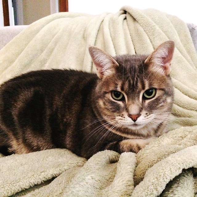 Happy #NationalCatDay to #ourlittlemanx. We love you, Astrid! #astridkitty