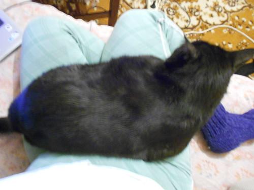 чёрный кот Муся на ручках