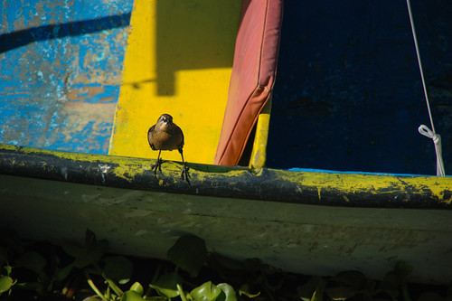 Bird on a brightly coloured boat in Mexico