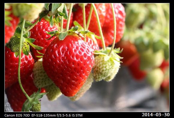 20140330_strawberry