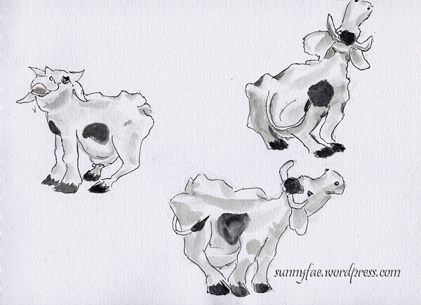 ornamental-cows