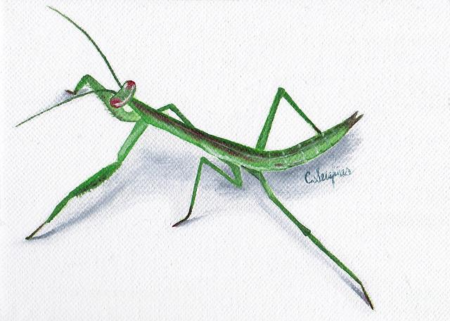 Serafinas-Mantis-r2