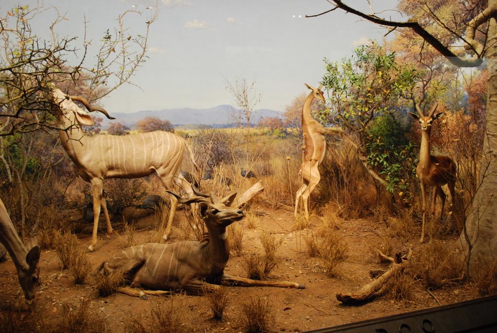 Natural History Nyc Free