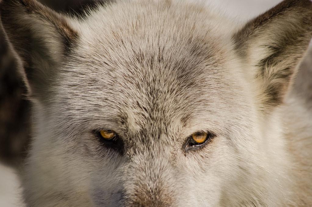 Melisa wolf facial