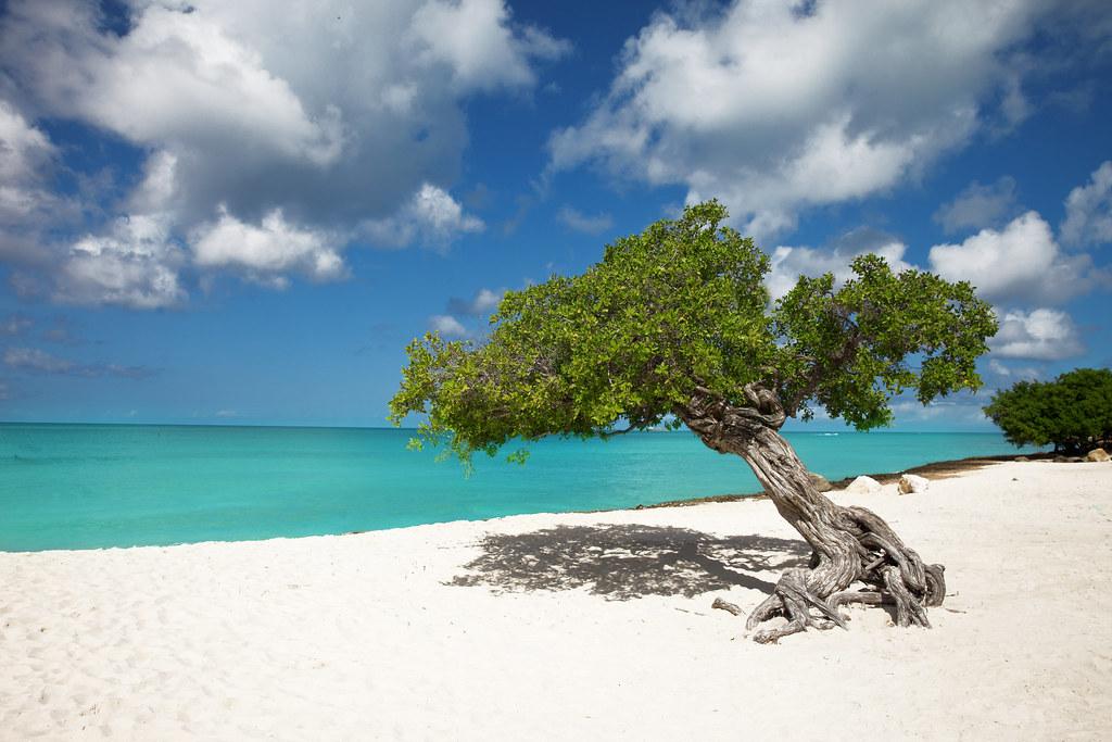 Tropical paradise aruba eagle beach divi divi trees - Divi beach aruba ...