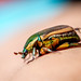 Color Study of a Beetle
