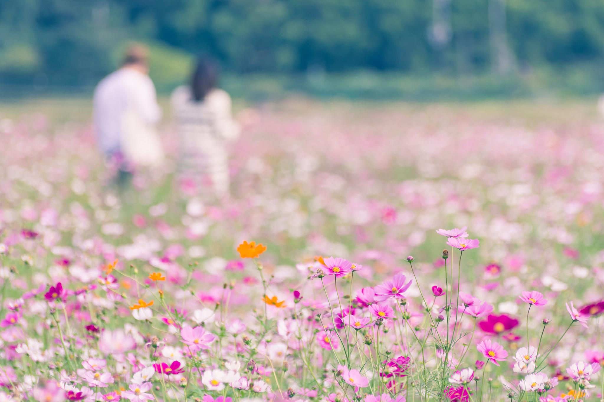 花畑の中へ