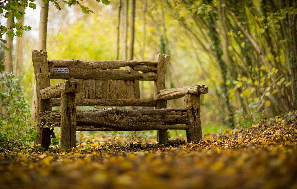 Bench A Beautiful Wooden Bench In Clapham Woods Sussex