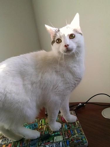 Bonus kitty standing on a closed laptop