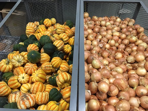 Locally-grown acorn squash and onions stored in the central kitchen for a harvest lunch in November